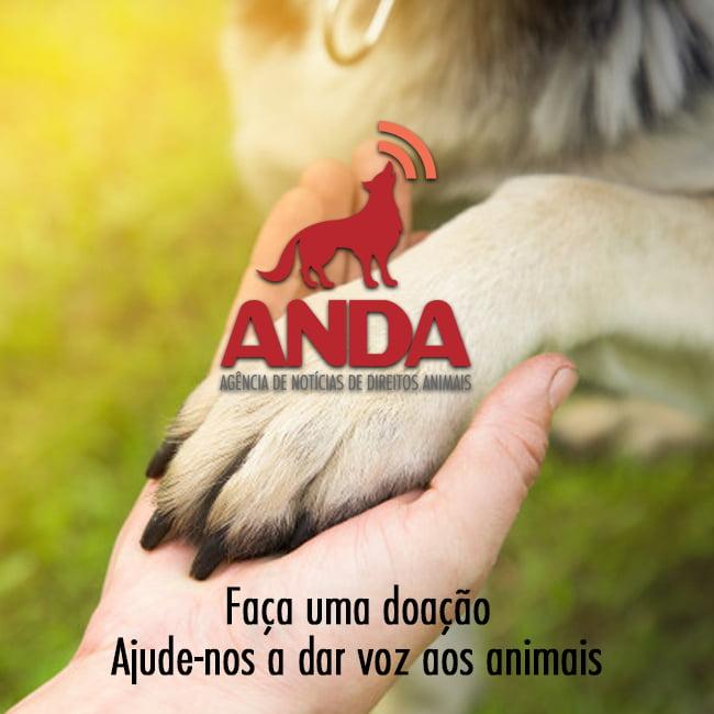 ANDA - Agência de Notícias dos Direitos Animais. Faça sua doação aqui.