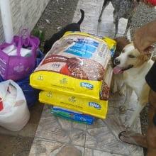 Campanha Barriguinha Cheia da ONG Bicho de Rua