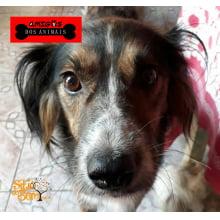 Campanha Amigos dos Animais de Osório/RS. Faça uma doação aqui.